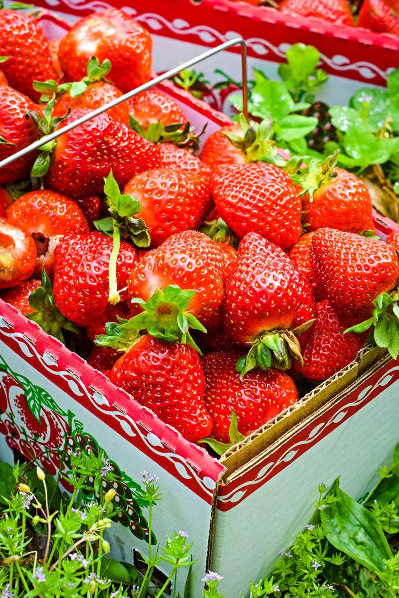 fresh strawberries in box, ready for strawberry shortcake